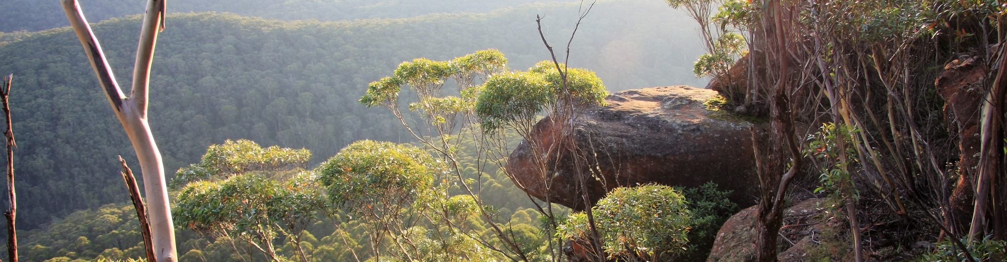 Weeds of the Blue Mountains