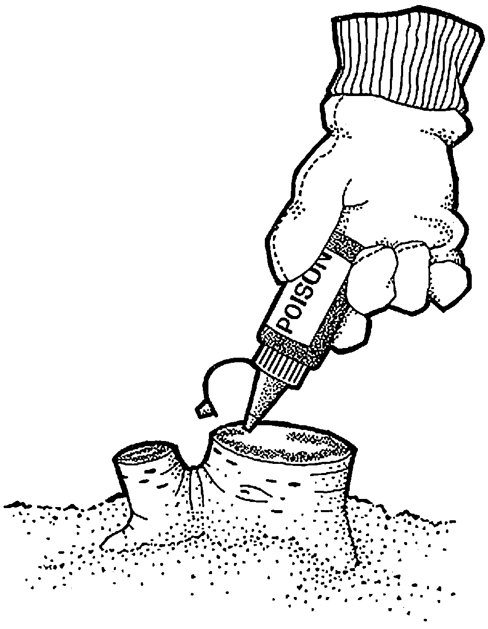 Applying poison to cut stump from squeeze bottle